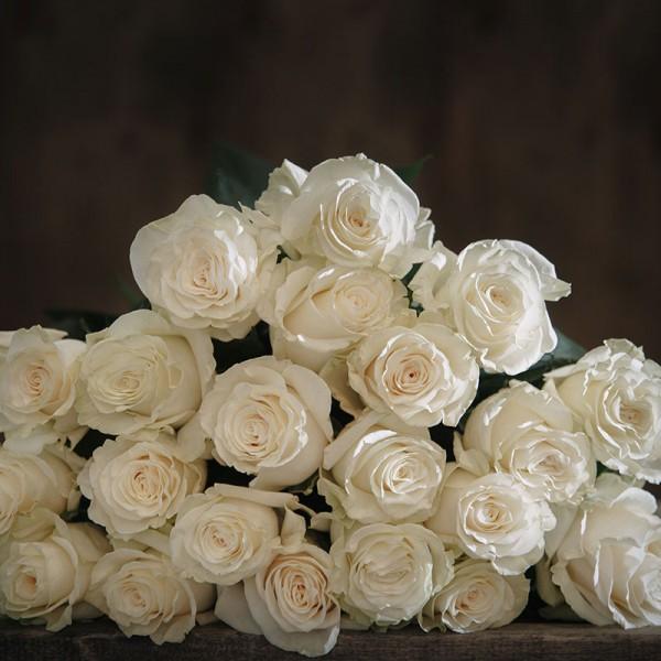 Роза сорт Мондиал
