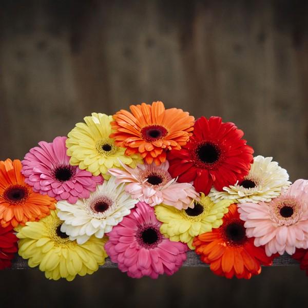 flowers-(16)